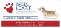 american kennel club bred with heart