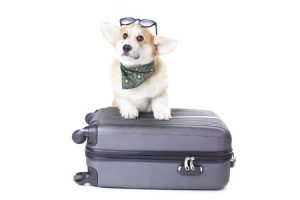 Tips for Traveling with Your Corgi